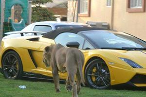 Instagram Star Humaid Albuqaish Mixes Hot Cars with Big Cats