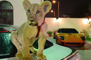 You Know You're Ballin' When Your Pet Lion Loves Supercars