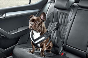 """The Dog Seat Belt Will Make You Say """"Aww"""" But Are They Crash-Safe?"""