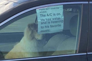 What Would You Do If You Saw This Dog Locked In A Car?