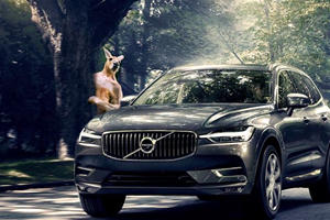 Volvo's Self-Driving Cars Can't Detect Kangaroos