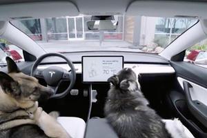Tesla Fans Rejoice: Dog Mode Has Arrived