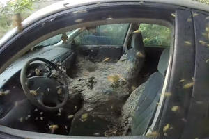 This Yellowjacket-Infested Chevy Malibu Will Freak You Out