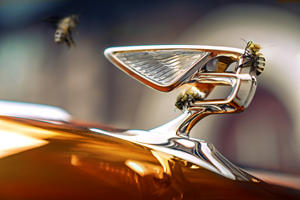 Bentley Turns Its Efforts To Building Bird And Bat Houses