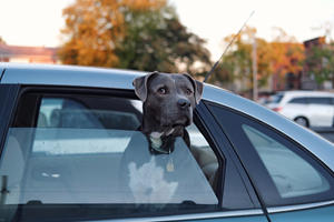 Top Tips For Travelling With Pets In Your Car