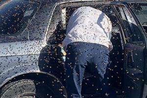 Man Discovers 15,000 Bees Swarming His Car