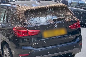 Watch Thousands Of Bees Attack A BMW SUV